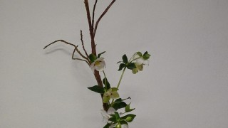 Classes especials_ shoka de salix sekka